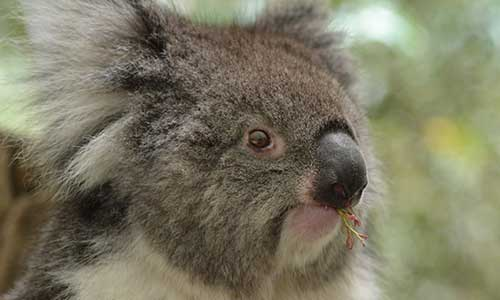 Top 5 Wildlife Parks In South Australia Top 5 South Australia