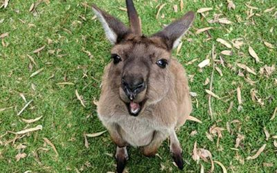 Top 5 Wildlife Parks in South Australia