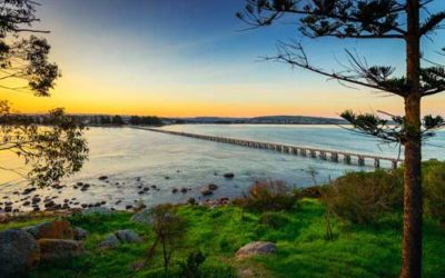 Best Wildlife Activities in Victor Harbor