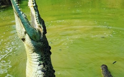 Top 5 places to see a crocodile in Australia